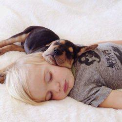 Οι εξετάσεις εγκεφάλου δείχνουν ότι τα σκυλιά μαθαίνουν όταν κοιμούνται - όπως και οι άνθρωποι