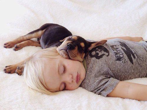 Οι εξετάσεις εγκεφάλου δείχνουν ότι τα σκυλιά μαθαίνουν όταν κοιμούνται – όπως και οι άνθρωποι