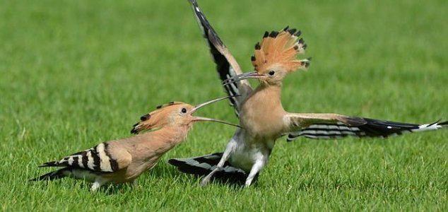 Απολίθωμα πουλιών ανακαλύφτηκε που υπήρξε πριν από 50 εκατομμύρια χρόνια