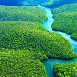 Αμαζόνιος-Η μεγαλύτερη αναδάσωση που έγινε ποτέ!