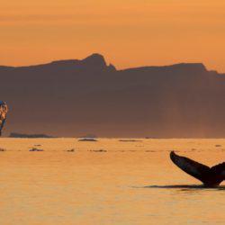 Ταξιδεύοντας μέσα στον ήλιο του μεσονυχτίου στη Γροιλανδία