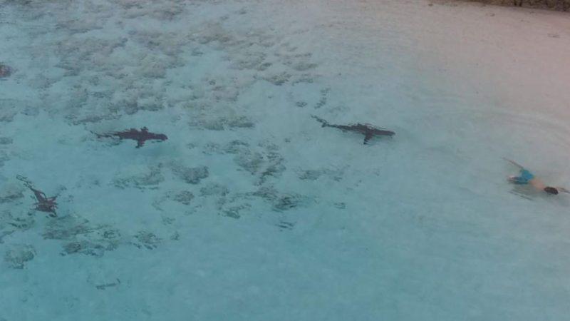 Μπαχάμες: Παιδί γλιτώνει στο… παρά πέντε από επίθεση καρχαρία (video)
