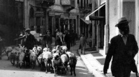 Τι γυρεύουν τα πρόβατα στην Πλάκα και το Κολωνάκι;