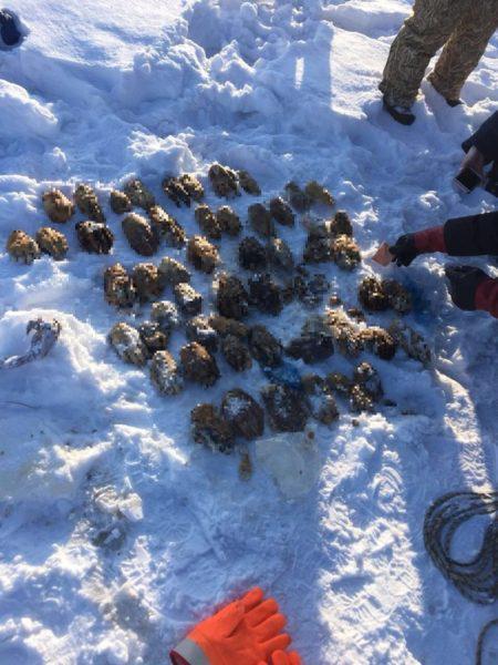 Σοκ στη Ρωσία: Ψαράδες βρήκαν τσάντα με 52 κομμένα χέρια