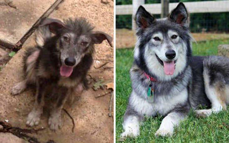 Σκύλοι πριν και μετά την υιοθεσία
