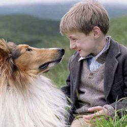 Θυμάστε τη Λάσι; Δείτε τι απέγινε το σκυλί της γνωστής σειράς