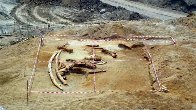 Γρεβενά: Στο κυνήγι των ελεφάντων πριν από 3,5 εκατ. χρόνια