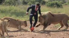 Παίζοντας μπάλα με άγρια λιοντάρια (Video)