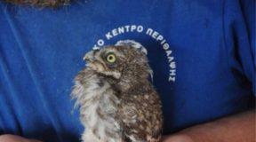 Κλείνει έπειτα από 18 χρόνια το Κέντρο Περίθαλψης Αγρίων Ζώων στην Αίγινα