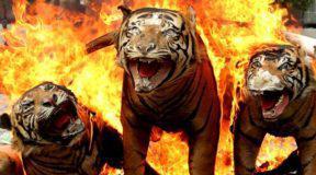 SOS από WWF: Σε 40 χρόνια η Γη έχασε το 60% των άγριων ζώων