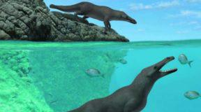 Τετράποδη φάλαινα περπατούσε και κολυμπούσε πριν από 42,6 εκατ. χρόνια