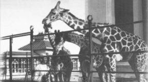 Ο πρώτος ζωολογικός κήπος στην Ελλάδα βρισκόταν στο Φάληρο. Γιατί έκλεισε