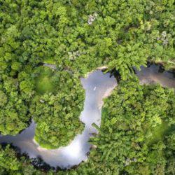 8 πράγματα που θα συμβούν αν καταστραφεί το δάσος του Αμαζονίου