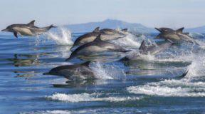 Tο πρώτο παγκόσμιο καταφύγιο απελευθέρωσης αιχμάλωτων δελφινιών στους Λειψούς
