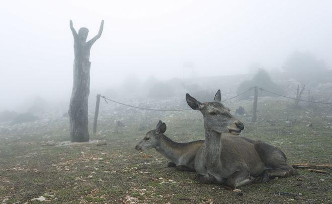 Πάρνηθα: Ελάφια στην ομίχλη – 10 φωτογραφίες βγαλμένες από παραμύθι