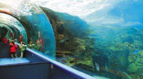 Θαλασσόκοσμος: ένα από τα μεγαλύτερα θαλάσσια πάρκα της Ευρώπης βρίσκεται στην Ελλάδα