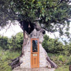 Η κρυμμένη Δεντροκκλησιά του Αγίου Παϊσιου - Κτισμένη στο εσωτερικό μιας βελανιδιάς