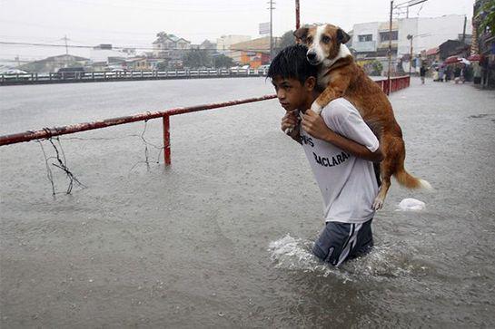19 Φωτογραφίες Που Αποδεικνύουν Ότι Τα Σκυλιά Είναι ΟΙΚΟΓΕΝΕΙΑ!
