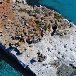 Το μοναδικό απολιθωμένο φοινικόδασος της Ευρώπης βρίσκεται κάπου στη Λακωνία. Έχει ηλικία 3.000.000 ετών
