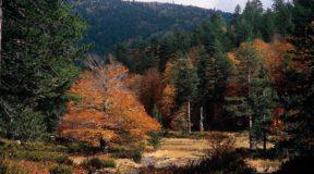 Βάλια Κάλντα: Άγρια ομορφιά στο σπίτι της καφέ αρκούδας