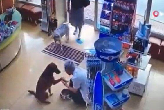 Αδέσποτο μπαίνει σε φαρμακείο και δείχνει στη φαρμακοποιό το τραυματισμένο πόδι του